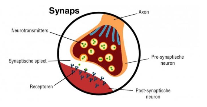 Louise Hay -affiramatie-blog-Synaps